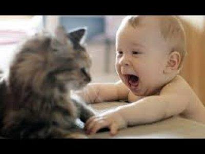 Bé và mèo