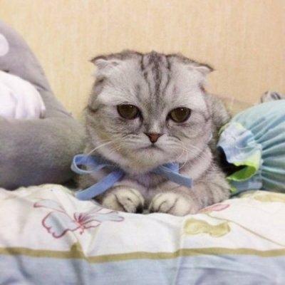 'Chú mèo buồn' gây xôn xao mạng xã hội