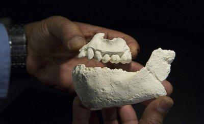 Tìm thấy hóa thạch khiến nguồn gốc người hiện đại trở nên hỗn loạn