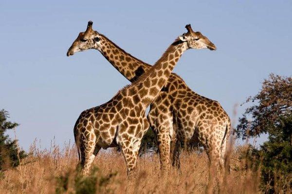 15 loài động vật khổng lồ nhất thế giới