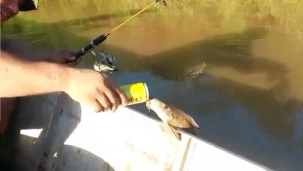 """Video: Chú cá ngoi lên mặt nước """"nhậu"""" với thợ câu"""