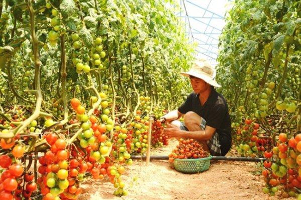 Anh em 9X từ chối học đại học, kiếm tiền tỉ từ trồng rau sạch