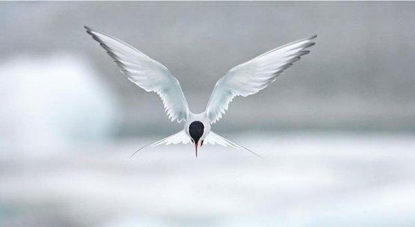 Thế giới kì thú của những loài chim qua ảnh