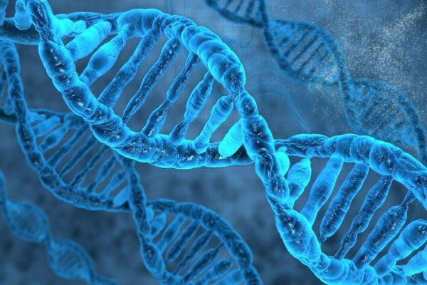 Giới khoa học tìm ra hàng trăm gen vẫn sống sau khi cơ thể chết
