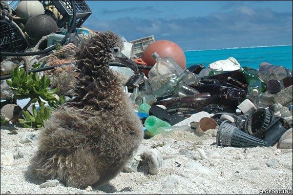 Các nhà khoa học tìm ra cách tái chế chai nhựa thành dầu diezel