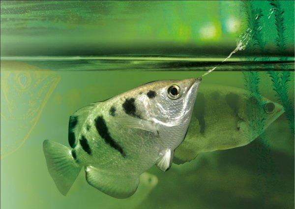 Kỳ lạ loài cá nhận diện được mặt người