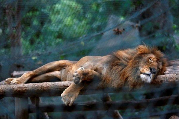 Khủng hoảng kinh tế Venezuela: Động vật cũng chết đói