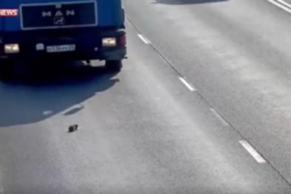 Mèo con thoát chết thần kì giữa đường cao tốc