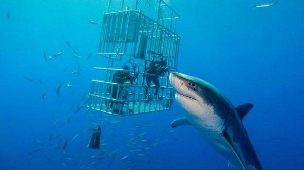 """Cứ tưởng an toàn, nhóm thợ lặn trong lồng sắt bất ngờ bị cá mập """"thả bom"""""""