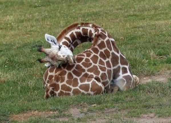 Top 10 loài vật hầu như không ngủ