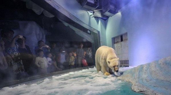 """""""Gấu Bắc cực buồn nhất thế giới"""" cuối cùng đã thoát khỏi trung tâm thương mại Trung Quốc"""