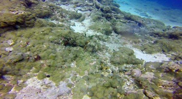 Chiêm ngưỡng khả năng ngụy trang siêu đẳng của bạch tuộc