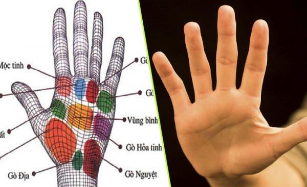 Những vấn đề cơ bản nhất về nhân tướng học bàn tay