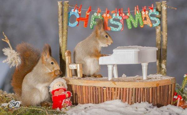 Bộ ảnh chào đón Giáng sinh của những chú sóc đáng yêu