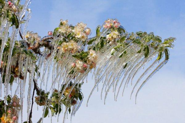 Thiên nhiên mùa đông đẹp lạ lùng như những kiệt tác nghệ thuật từ băng tuyết