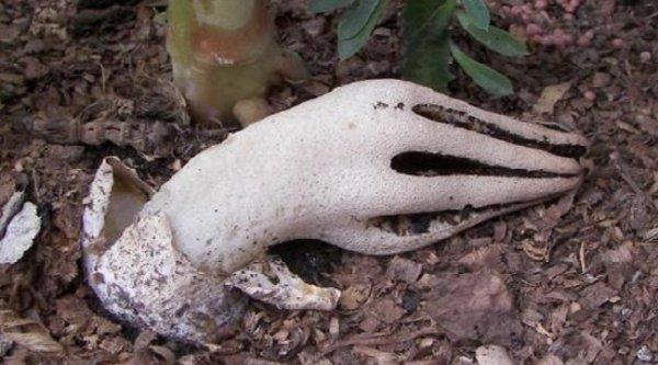 Những loài thực vật giống bộ phận cơ thể người đến kỳ lạ