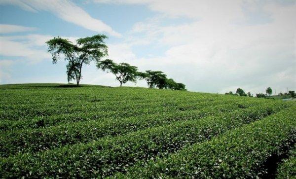 """Tìm về """"lá phổi xanh"""" của miền đất đỏ bazan"""