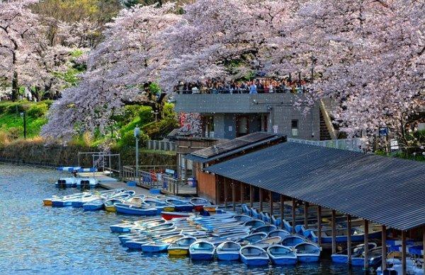 Nhật Bản – Nơi giao thoa giữa truyền thống và hiện đại