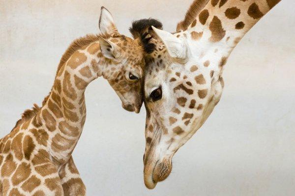 Niềm hạnh phúc trong thế giới động vật