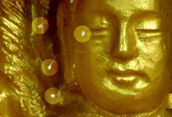 Chờ đợi 3.000 năm, luân hồi 5.000 năm – Đừng bỏ lỡ cơ duyên vạn cổ này!