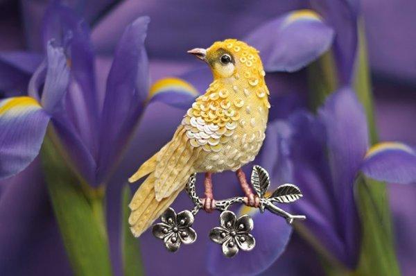 """Những chú chim như đến từ """"thiên đường"""""""