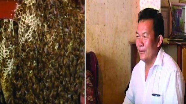 Gia đình sống chung với đàn ong suốt 12 năm