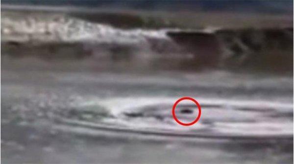 Xuất hiện sinh vật lạ giống quái vật hồ Loch Ness khiến người dân Trung Quốc xôn xao
