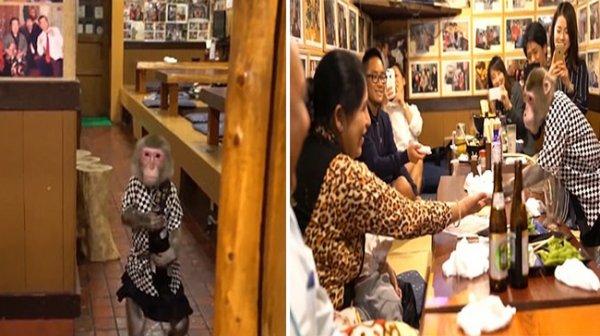 Nhà hàng Nhật Bản thu hút khách vì có phục vụ bàn là khỉ