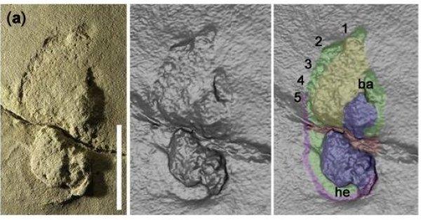 Dấu chân 5,7 triệu năm tuổi ở Hy Lạp thách thức thuyết tiến hóa