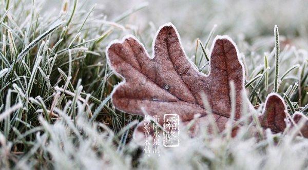 Tiết Sương Giáng: Thời khắc bồi bổ quan trọng nhất năm