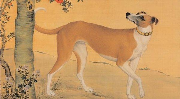 Vạn vật đều có linh: Gặp chuyện oan khuất, chó cũng biết tố cáo