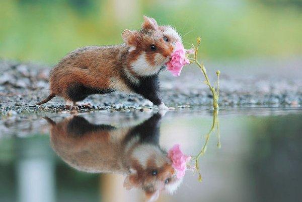 Cuộc sống 'thong dong tự tại' của những chú chuột hamster