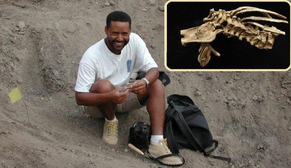 Hóa thạch 3,3 triệu năm tuổicho thấy con người đã đi bằng 2 chân từ hàng triệu năm trước