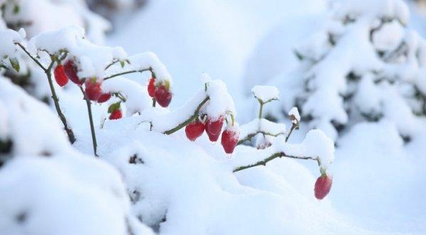 Tiết Đại Tuyết: Dưỡng sinh phải cân bằng, chú ý 10 điều cần phòng tránh