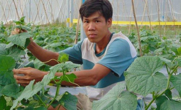 Câu chuyện khởi nghiệp của chàng trai tu nghiệp ở Israel về quê trồng dưa lưới