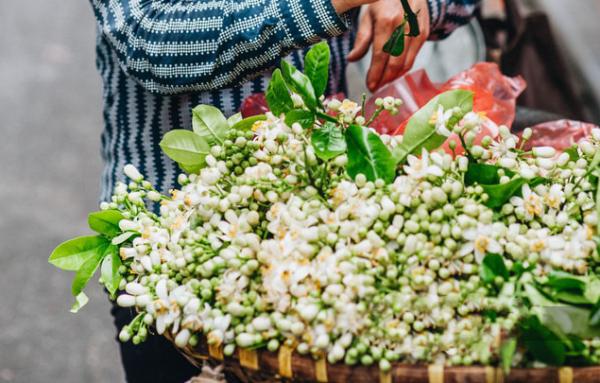 Hà Nội đón chờ tháng 3 với hương hoa bưởi thơm ngát