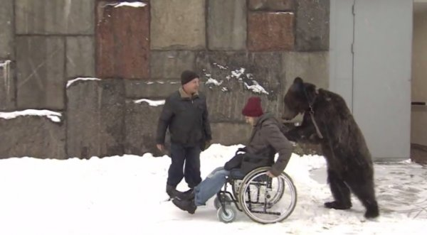 Kỳ lạ chú gấu đứng bằng 2 chân đẩy xe lăn cho người dạy xiếc