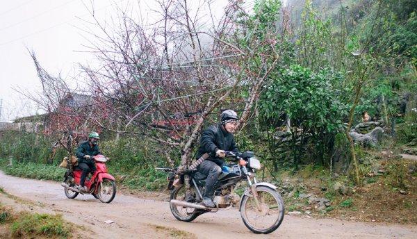 Đào rừng xuống phố, nhiều hộ gia đình miền núi thu về hàng trăm triệu đồng
