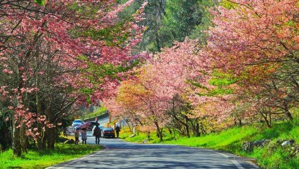 Chiêm ngưỡng cảnh sắc thiên nhiên rực rỡ tại công viên Dương Minh Sơn