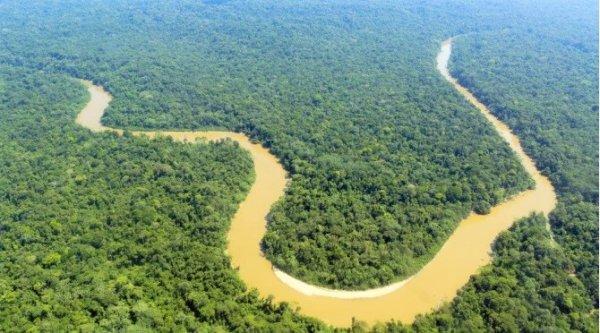 Rừng Amazon sắp mất nửa số loài vì biến đổi khí hậu
