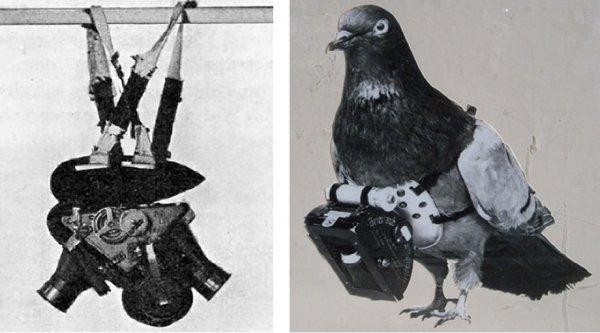 Bạn có biết: 100 năm trước đã có bồ câu 'drone' rồi nhé!