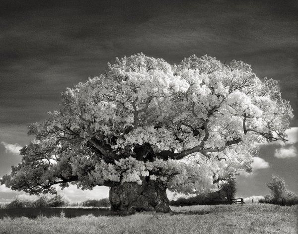 Người phụ nữ dành 14 năm để chụp lại những cây cổ thụ cổ nhất thế giới