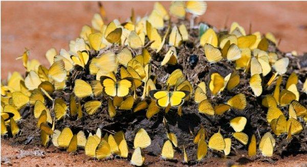 Những địa điểm lý tưởng để ngắm nhìn hàng ngàn con bướm bay lượn tại Đài Loan