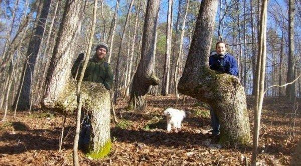 Đánh dấu đường bằng cây uốn cong: Thói quen lạ của người Mỹ bản địa