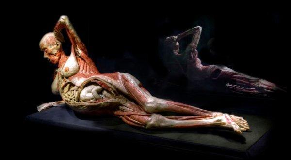 Triển lãm cơ thể người – Giáo dục hay đồ tể?