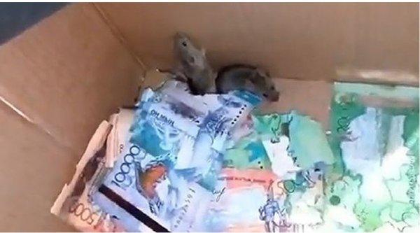 """""""Đạo chích"""" chuột lẻn vào máy ATM cắn nát hơn 17 nghìn USD"""