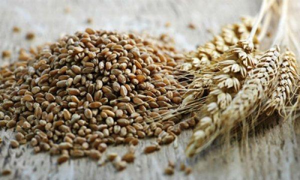 Lúa mì spenta: Ngũ cốc cổ xưa nuôi dưỡng một cơ thể khỏe mạnh