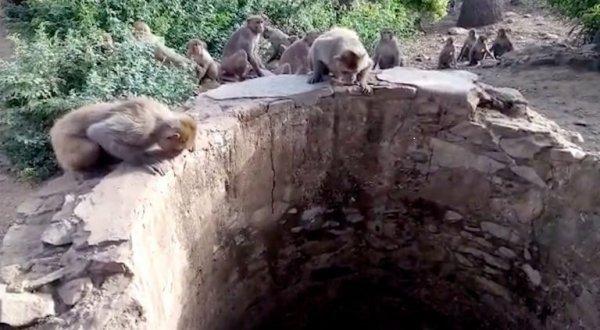 Điều gì sẽ xảy ra với chú báo hoa bị rơi xuống giếng sâu nếu không có bầy khỉ?