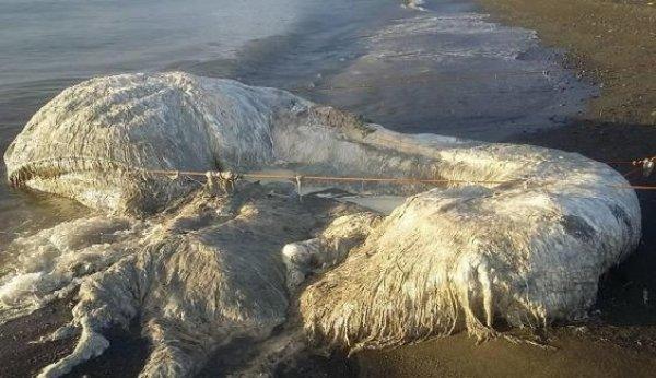 Sinh vật kỳ dị trôi dạt vào bờ biển Philipines