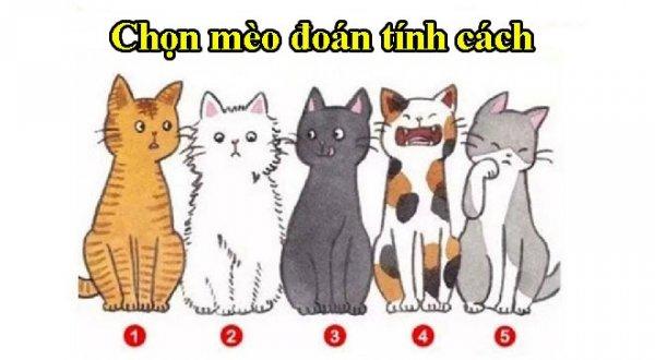 Trắc nghiệm vui: Mỗi chú mèo đại diện cho một nét tính cách của bạn